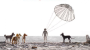 Trailer Alert – Isle of Dogs